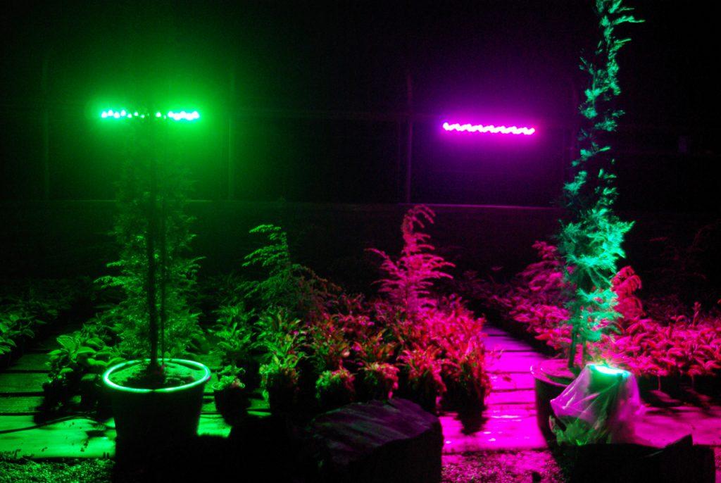 LED-Strahler tauchen die Baumschule Meschede in ungewohntes Licht. Foto: Kultur Pur/Ulrich Bock
