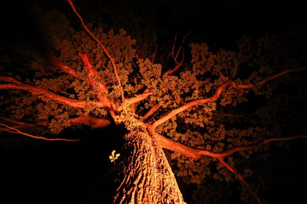 Die Bäume sind in orangefarbenes Licht getaucht. Foto: Kultur Pur/Ulrich Bock